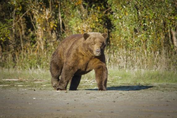 Janosch Hagen und Jan Krüger sind auf ihrer Abenteuerreise durch Alaska und Kanada vielen Bären begegnet, wie diesem Grizzlybär